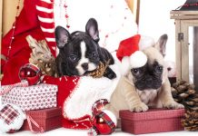 Ideas to Getting Great Pet Christmas Cards